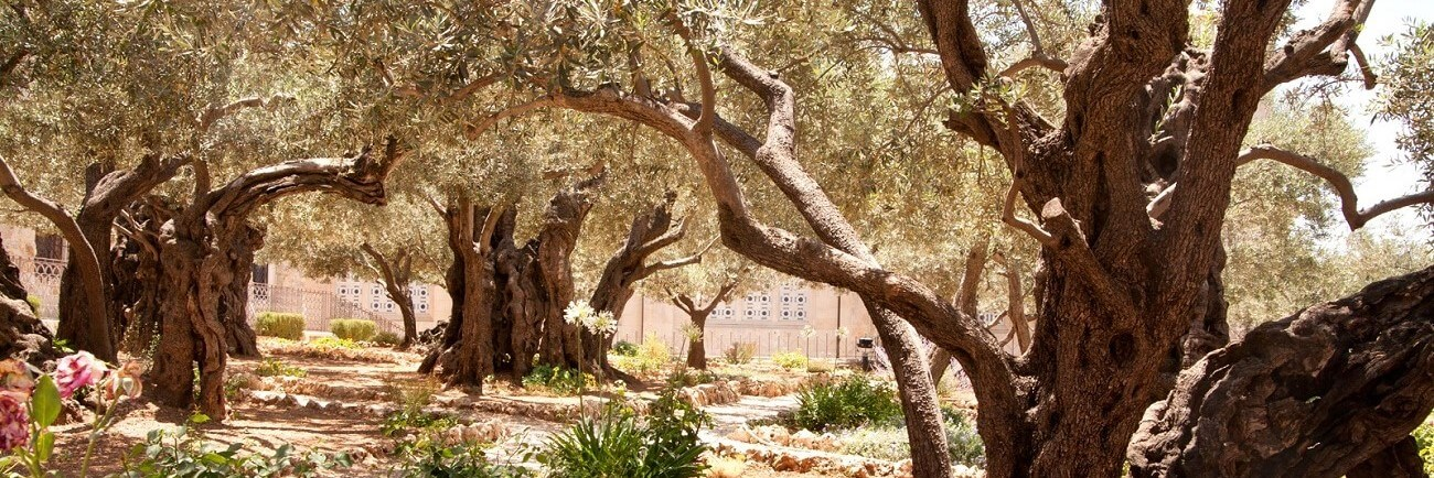 Classic Catholic Israel Tour – 8 days, 7 nights